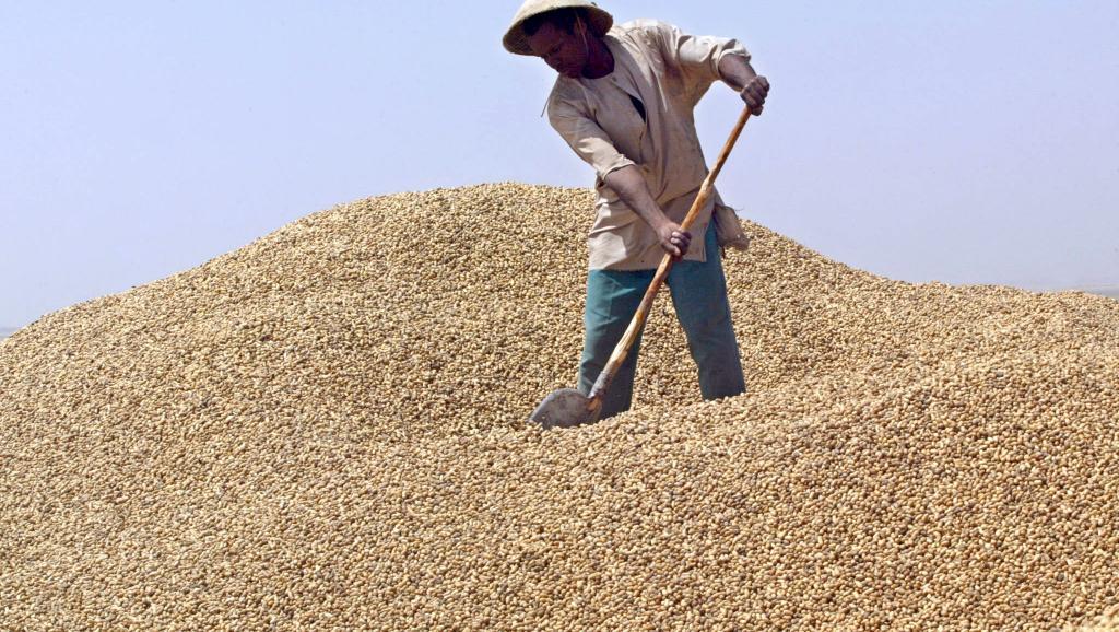 Campagne de l'arachide au Sénégal: les producteurs rient, les huileries pleurent.